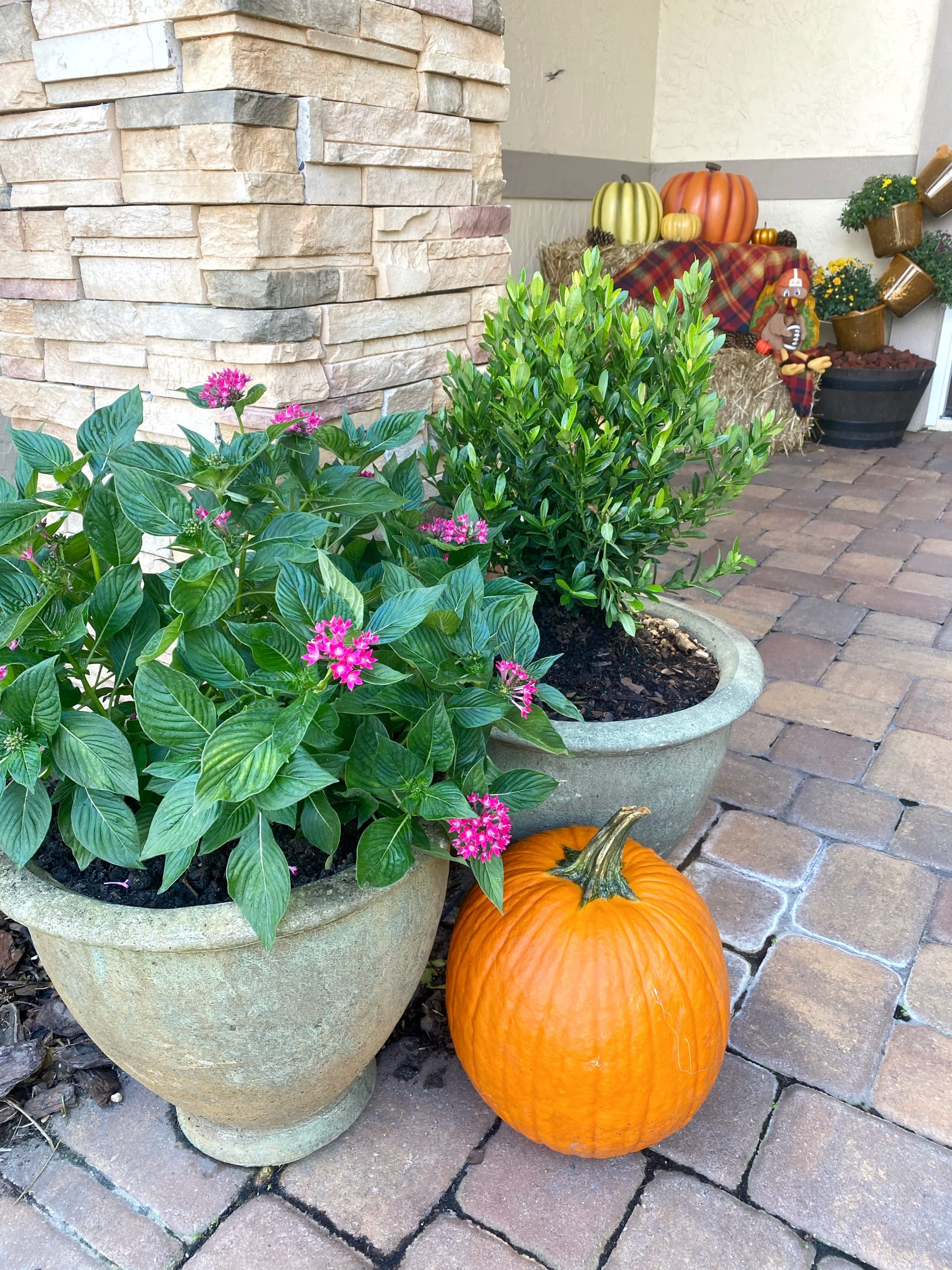 pumpkin next to flower pots