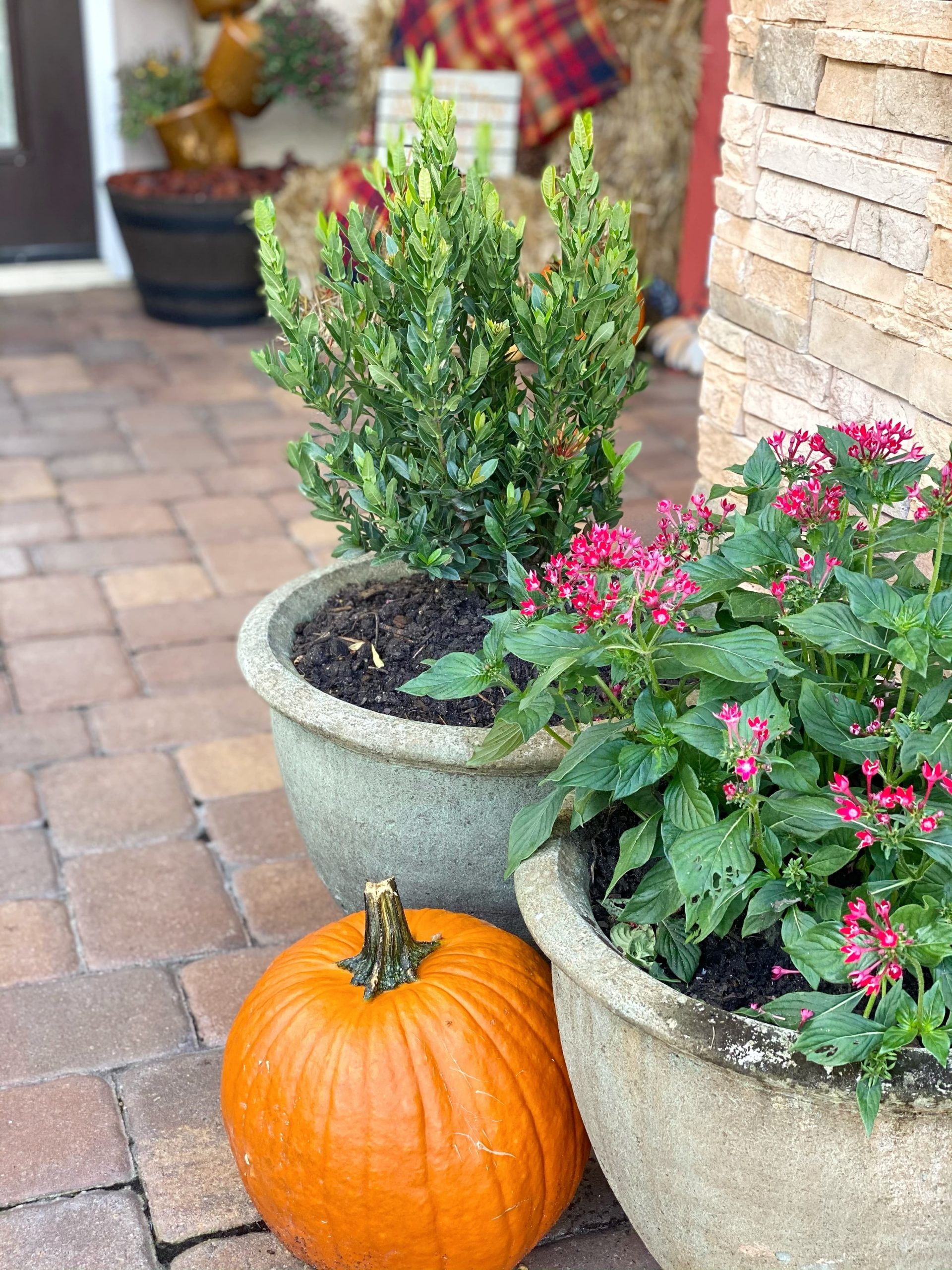 pumpkin by flower pot