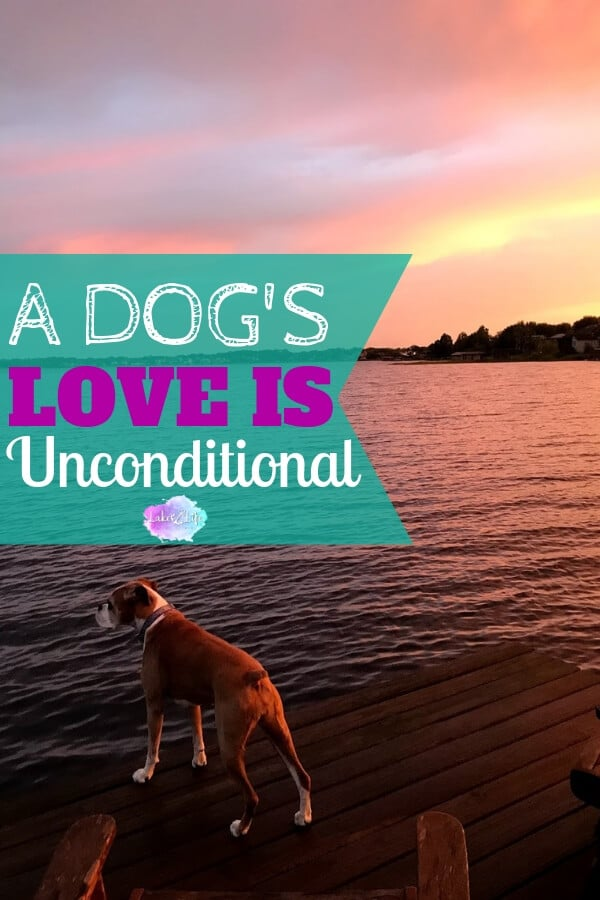 The love of a dog is truly unconditional. Come meet our furry family member, Luckie Girl. See some of the things she loves and learn why we are LUCKY to have her in our lives! Luckie is the best lake dog a human could ask for. #lakedog #lakelife #boxers #lakelifestateofmind